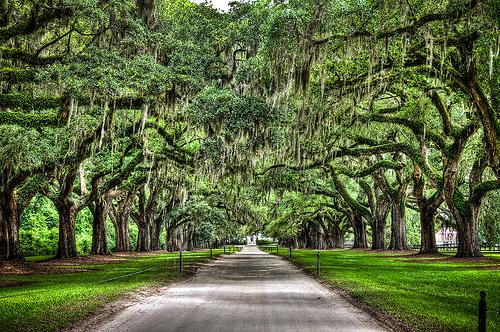 North Carolina Avenue of the Oaks