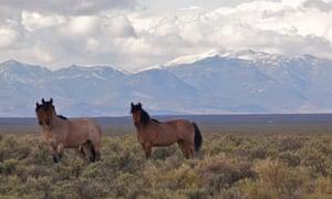 Nevada Wild Mustangs - ALTA Land Title Survey