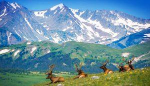 elk range colorado - ALTALandSurvey.com